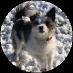 poppy dog team mascot